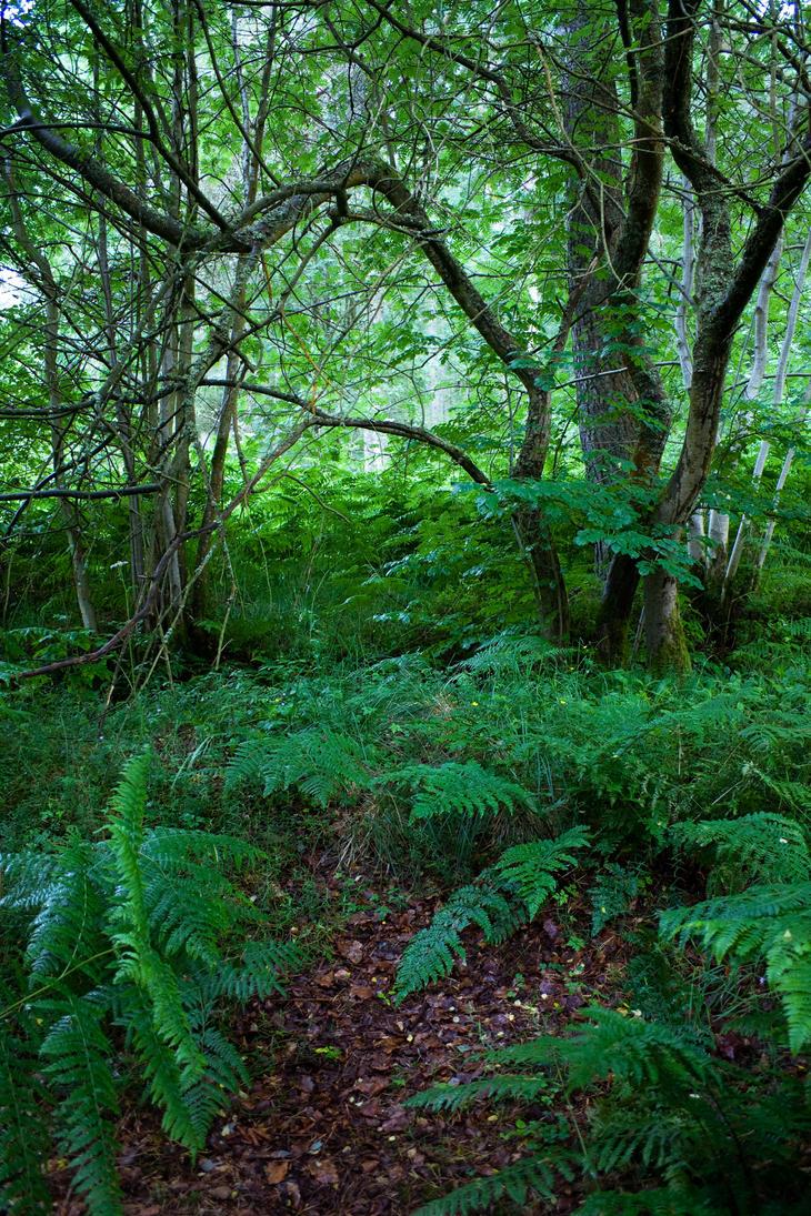 Woodland 65 by joannastar-stock