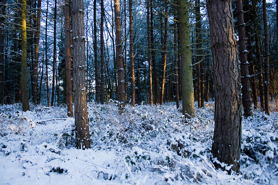 Snowy Woodland 12 by joannastar-stock