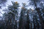 Snowy Woodland 27