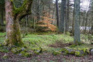 Woodland 79