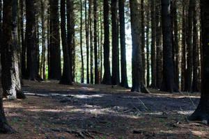 Woodland 151 by joannastar-stock