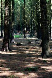 Woodland 154