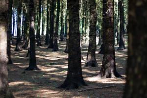 Woodland 157