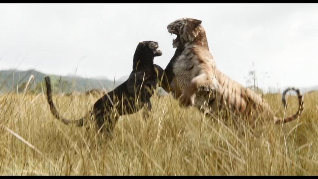Shere Khan VS Bagheera by KateHasBoobs