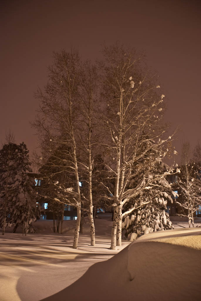 Snowy Trees by btmccord