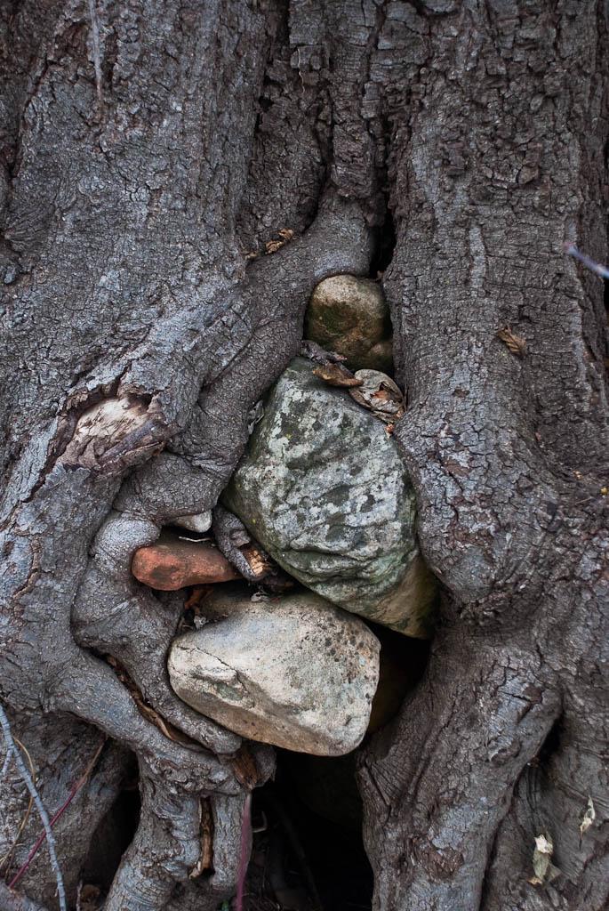 Rock Vs. Tree by btmccord
