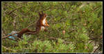 The Swedish Red Squirrel Pose by LoneDoggy