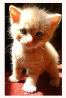 nothing better than a kitten by natasha-marie