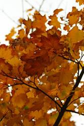 Autumn Leaves 3 by TSDMK