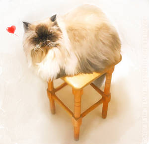 +Kapitosha Cat+