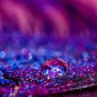 purpur by photopsie