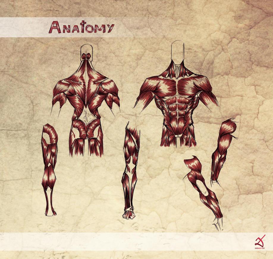 Anatomy by Debarsy