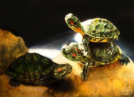 Tortugas by Bara-Rose