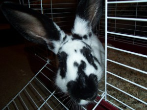 zelda64241's Profile Picture
