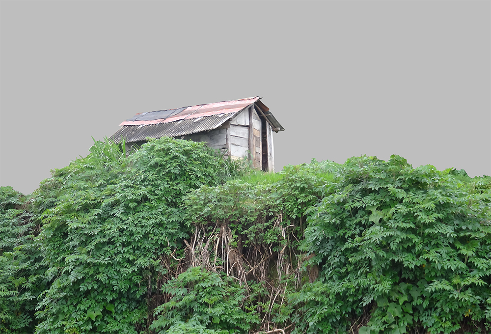 huts and tree cassava - lanscape Background
