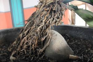 Root Tree by andhikazanuar