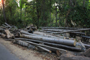 logs by andhikazanuar