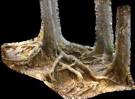 tree trunk by andhikazanuar