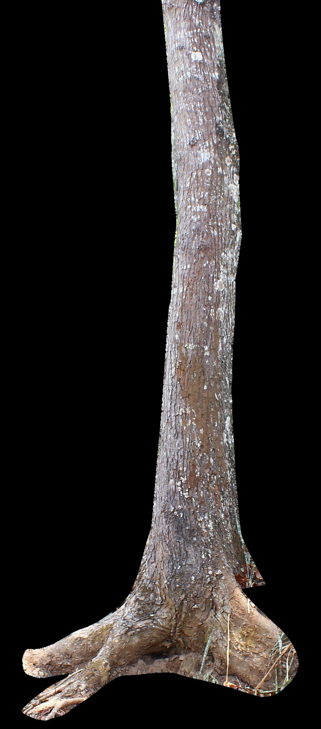 tree trunk png by andhikazanuar
