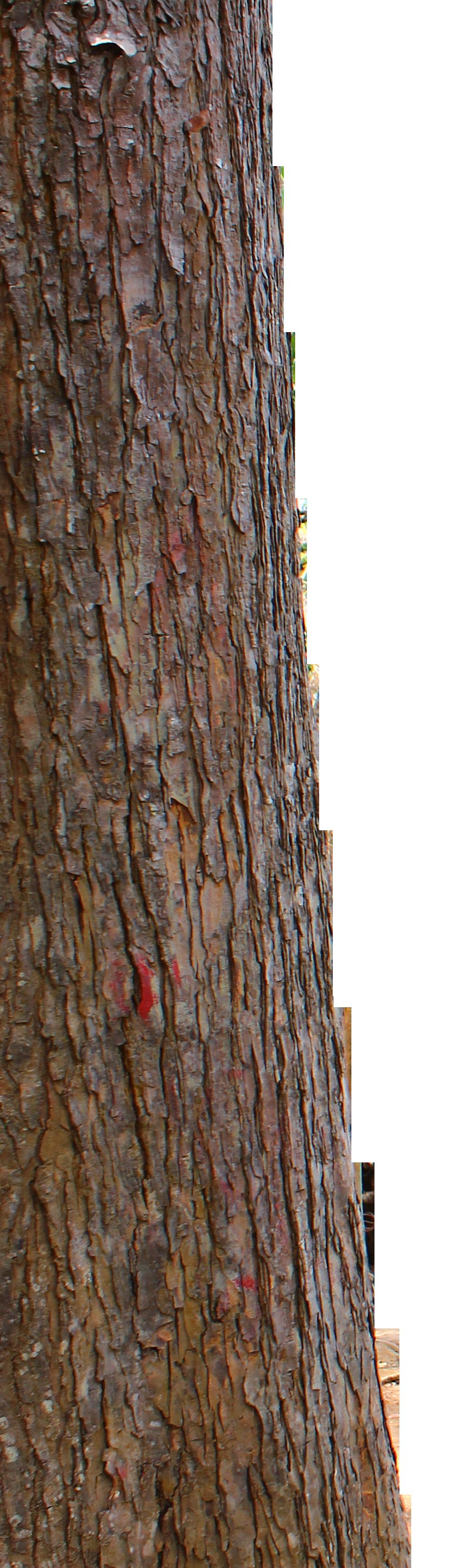tree trunk by andhikazanuar on DeviantArt