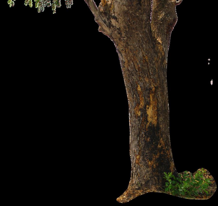 tree PNG by andhikazanuar