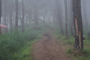 road foggy by andhikazanuar