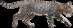 Wildcat PNG by andhikazanuar