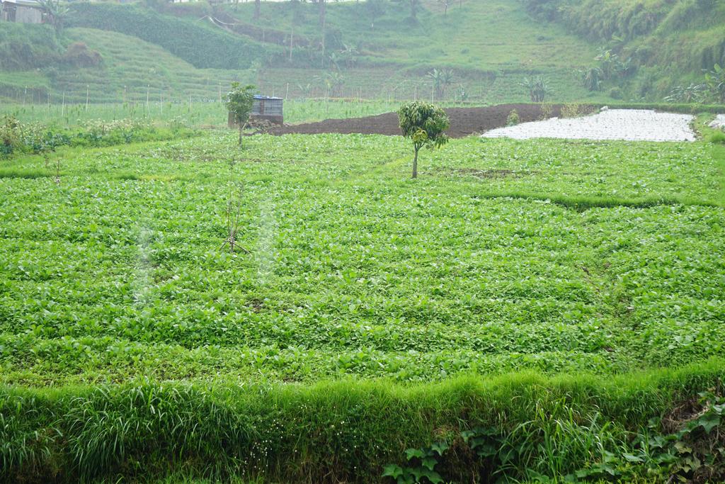 views of rice fields