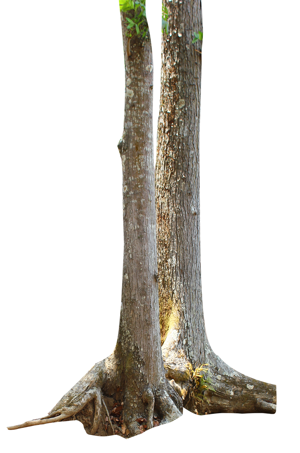 Tree Trunk PNG by andhikazanuar