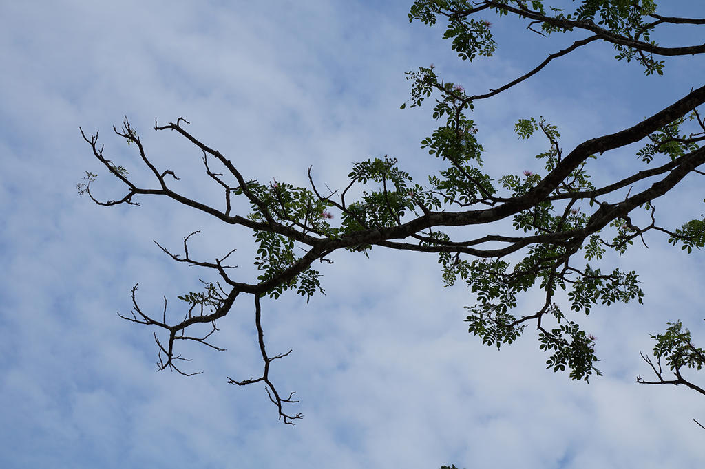 Tree Corner by andhikazanuar