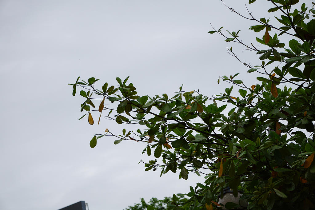 Branches by andhikazanuar