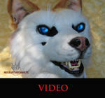 Blonde husky video