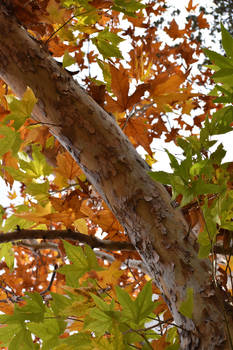 Leaf Mixture