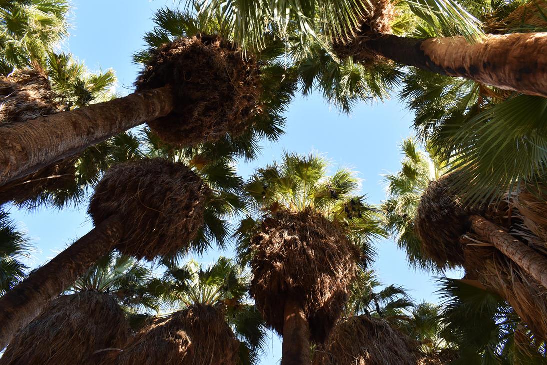 Palm Tree Oasis by jdurbin