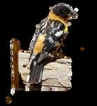 Grosbeak cutout