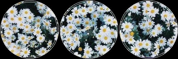 F2U Bloom By KittensPurrgatory