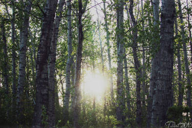 Forest Light by paintballz