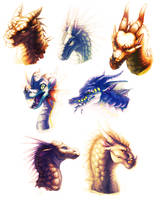 Wings Of Fire Species Portraits