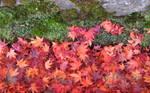 Autumn at Mount Koya
