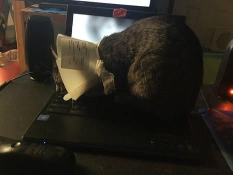 My cat stole my computer.
