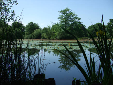 Pond at Battle Abbey