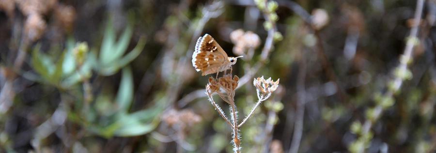 Brown wings by gokmenkaya