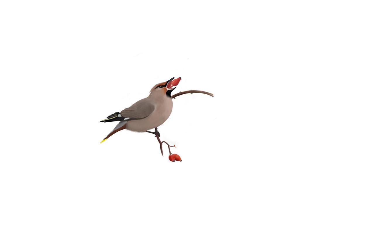 birdie by MorningLaughter