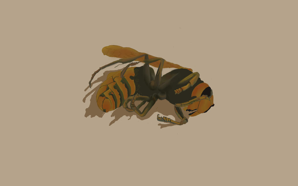 Wasp by MorningLaughter