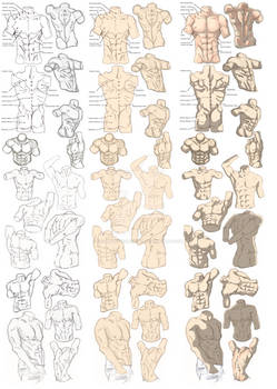 Male Figure Study Process