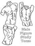 Torso Study 9