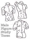 Torso Study 10