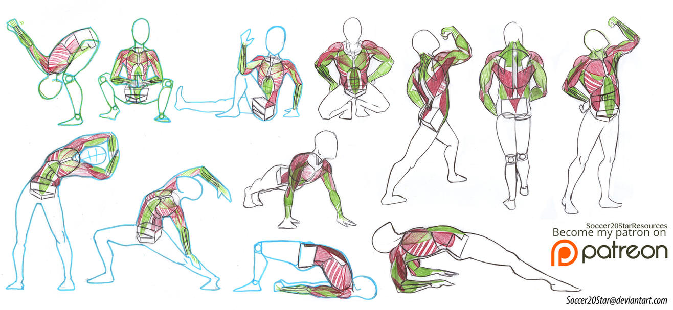 Anatomy 4 Arm Muscles By Courtneysconcepts On Deviantart
