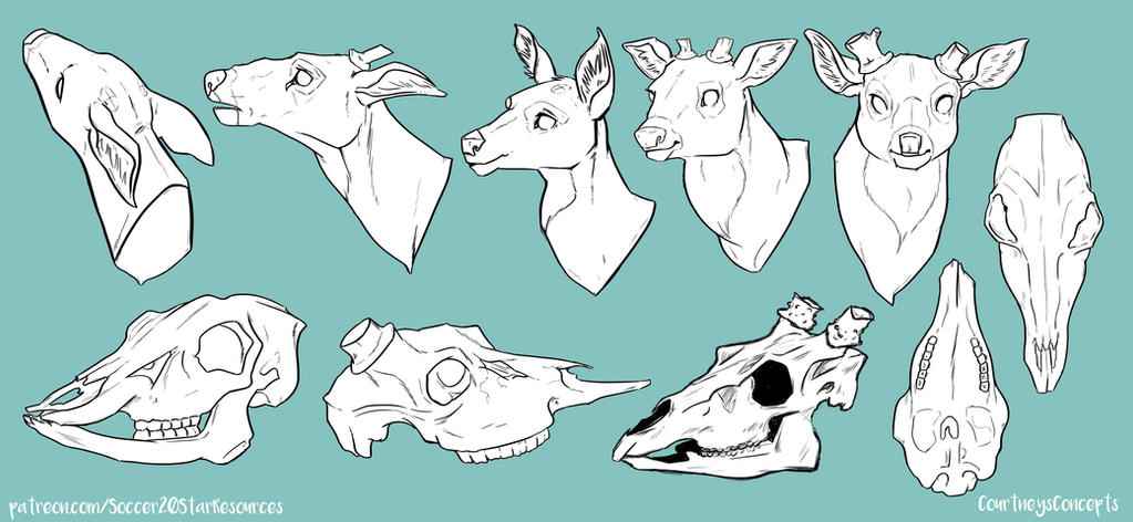 Deer Head and Skull Reference by CourtneysConcepts on DeviantArt