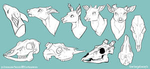 Deer Head and Skull Reference